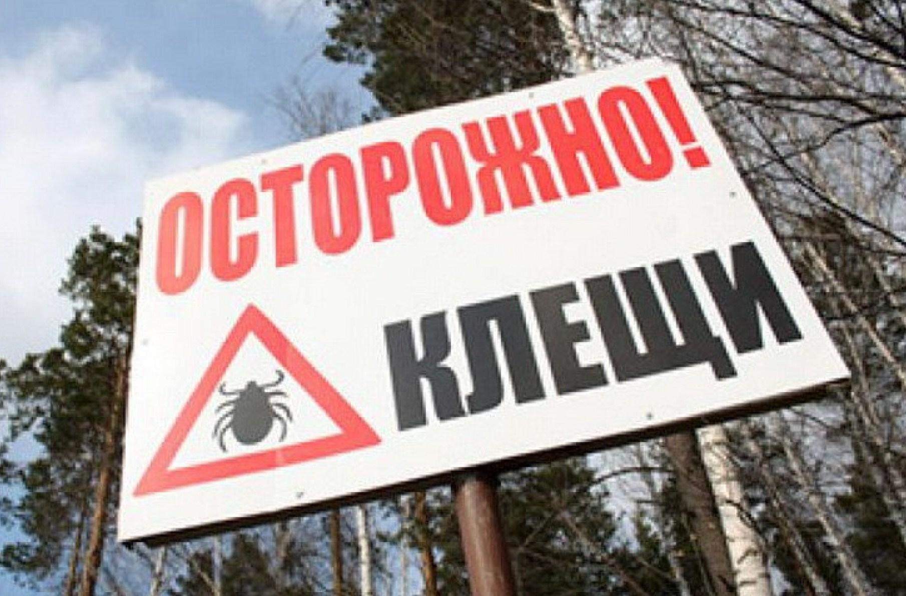 Залето 50 граждан Тюменской области заразились клещевым энцефалитом
