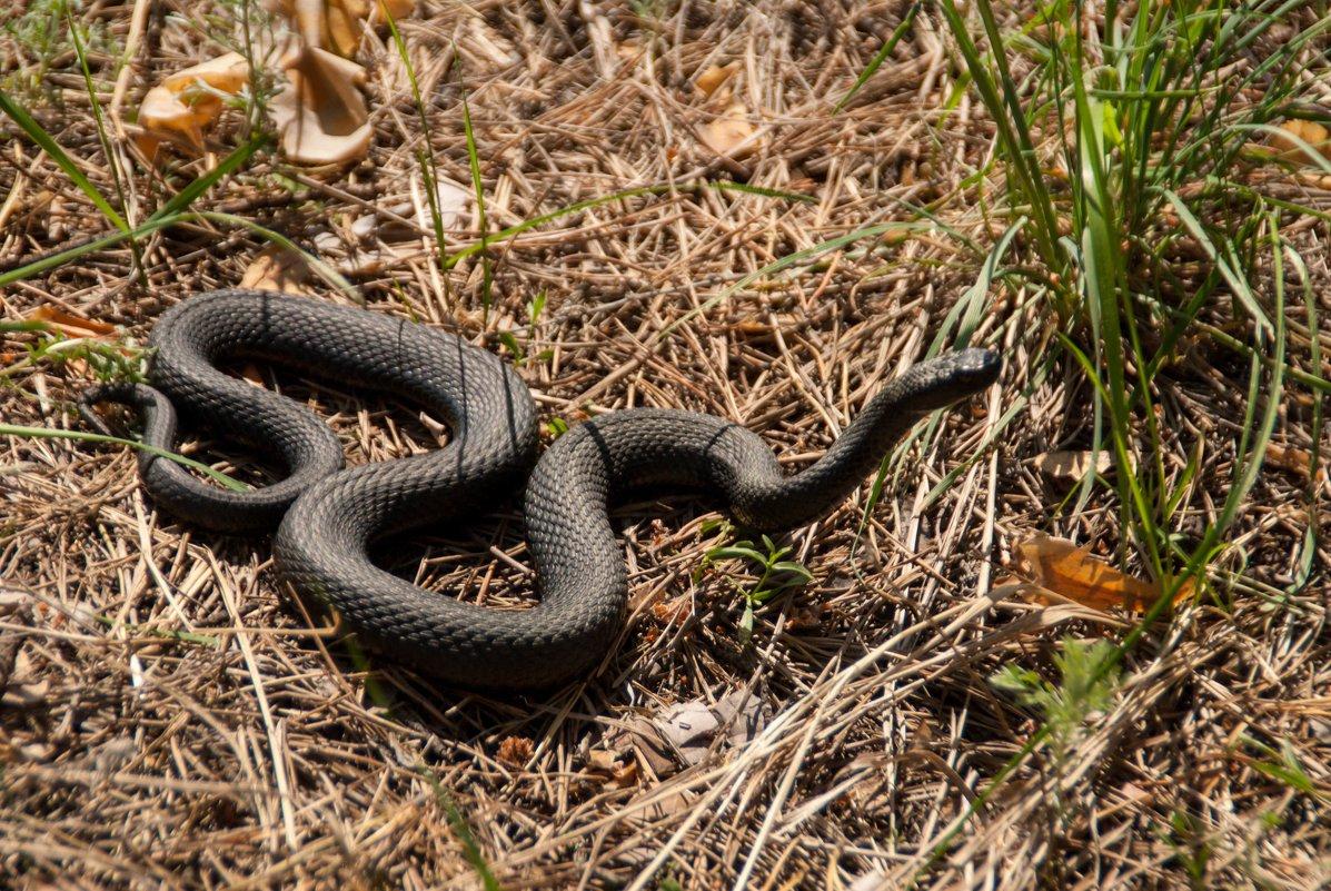 змеи владимирской области фото и название довольно своеобразный город